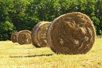 Of all things one may underestimate in this world, let it NOT be the power of hay.